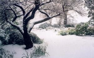 ornamental-garden-1