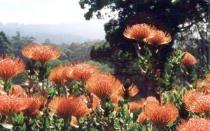 ornamental-garden-11
