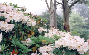 ornamental-garden-3