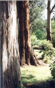 ornamental-garden-8
